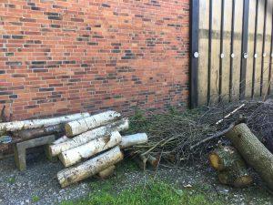 Birkenholz vor der Halle