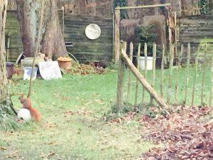 Workshop Garten und Atelier. Im Naturschutz Gelände findest du viele Tiere. Eichhörnchen sind auch mit dabei.